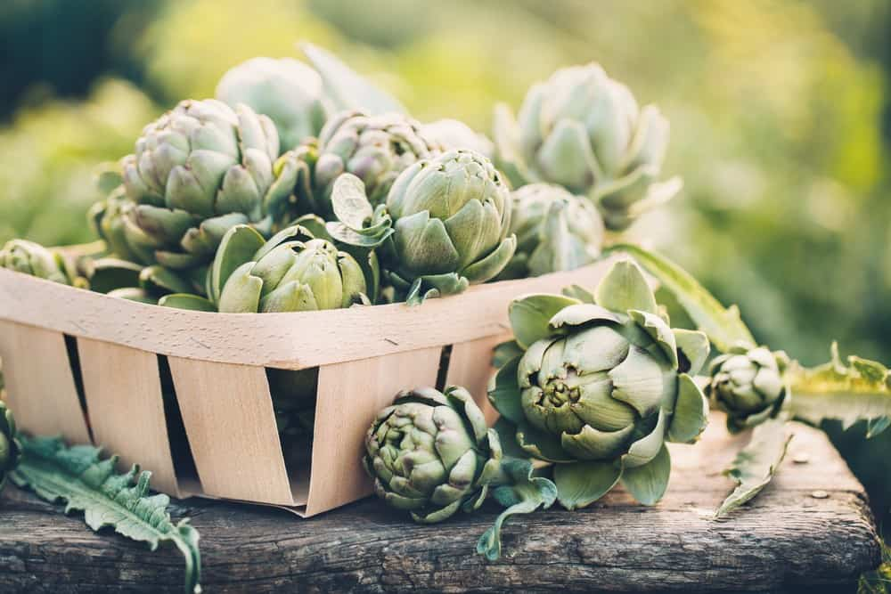 Do artichokes go bad? 1
