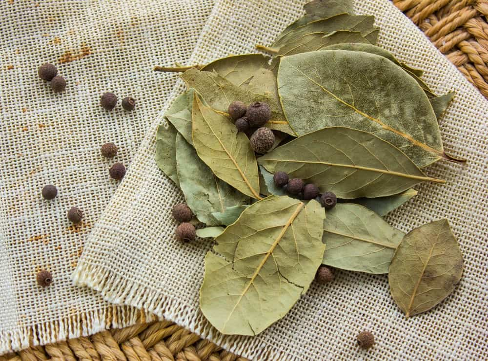 Do bay leaves go bad? 1