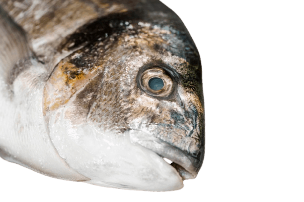 How to tell if frozen fish is bad - 10 Sure Signs a Frozen Fish is Bad 3